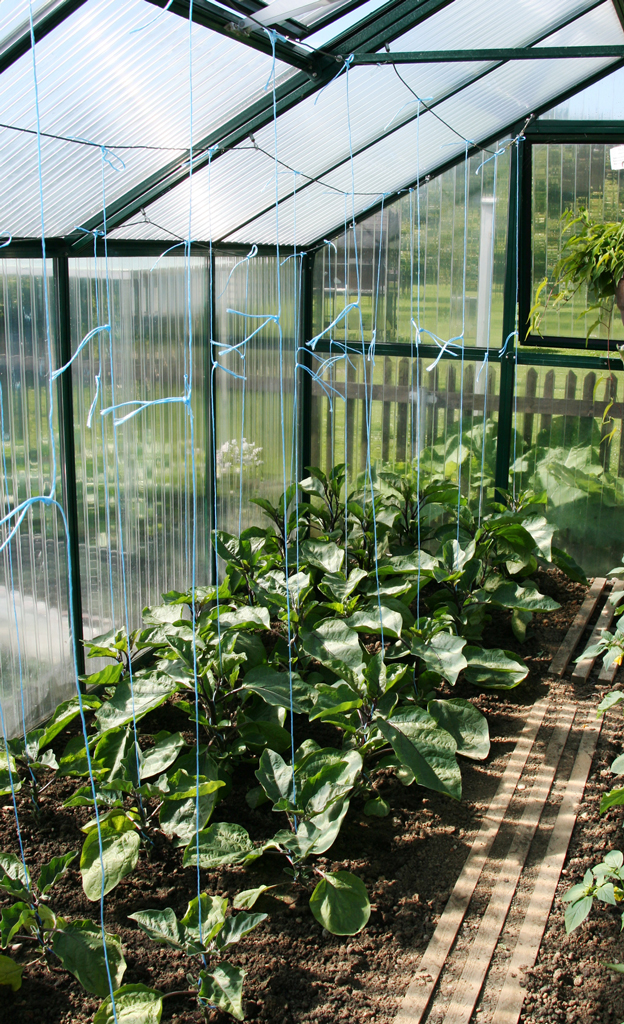 Gurke pflanzen